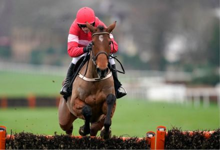 Laurina being favoured to run in the Cheltenham Champion Hurdle by punters