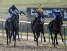 UK Horse Racing Tips: Lingfield