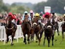 Tuesday's  Money Horse through Oddschecker