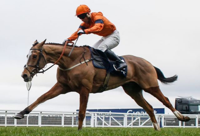 Cheltenham Focus: Stayers Hurdle betting preview