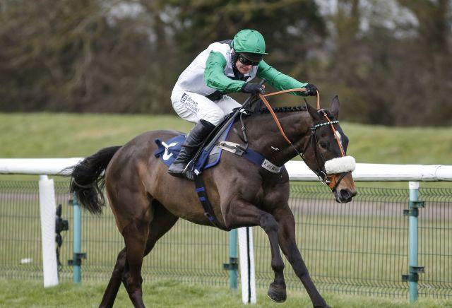 Unbeaten Vinndication backed to go chasing at Cheltenham