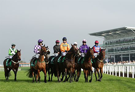 Money Horse: Saturday's Most Backed Horse