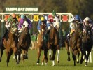 Wednesday US Racing Tips: Tampa Bay Downs