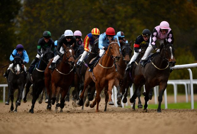 Money Horse: Monday's Most Backed Horse